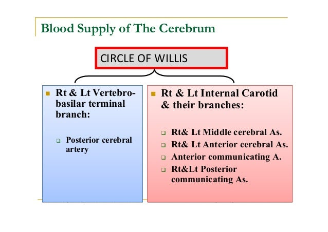 flow chart blood supply of brain: Blood supply of the brain