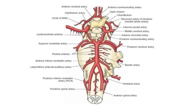 Fetal Circulation By Drsrikanta Biswas furthermore Index likewise Blockworks Inc Industrial moreover 223963360 fig1 Schematics Of The Process Of Metastasis A Formation Of Metastatic Tumor Cell Lines At together with Junk Food 39585904. on brain circulation