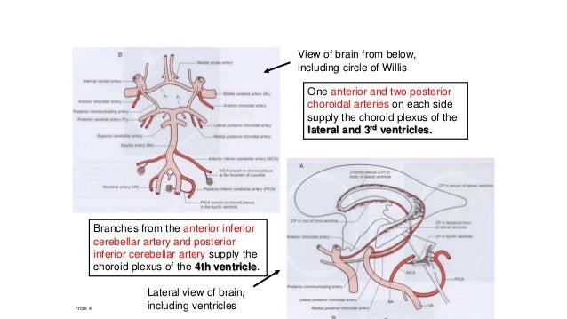 blood supply of spinal cord pdf