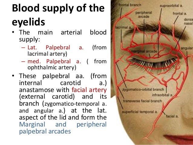 blood supply of face pdf