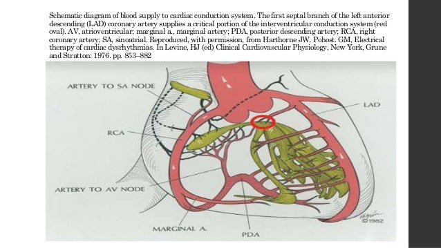 Blood supply to cardiac conduction system blood supply to cardiac conduction system 2 schematic diagram ccuart Choice Image