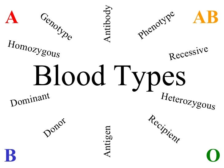 Blood Types A O B AB Donor Recipient Genotype Phenotype Antigen Antibody Homozygous Dominant Heterozygous Recessive