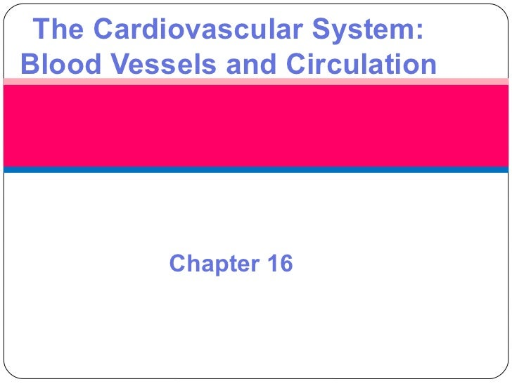 The Cardiovascular System:Blood Vessels and Circulation          Chapter 16