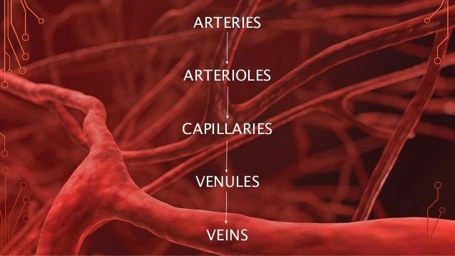 Image result for blood veins