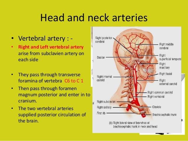 Vascular structure head and neck Almas khan , Khorfakkhan hospit…