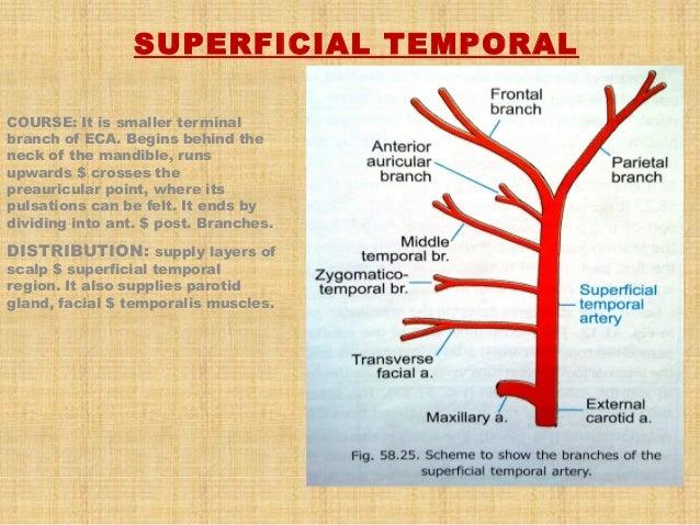 thyroid slide