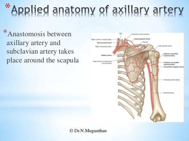 Blood vessels of upper limb - pdf lecture notes by Dr.N.Mugunthan