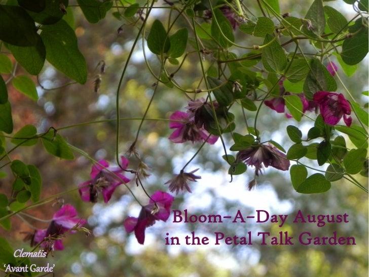 Bloom–A–Day August                in the Petal Talk Garden  Clematis'Avant Garde'