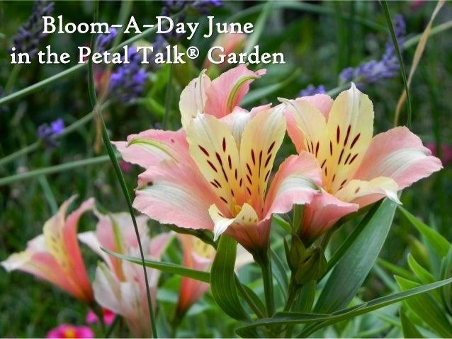 Bloom–A–Day Junein the Petal Talk® Garden