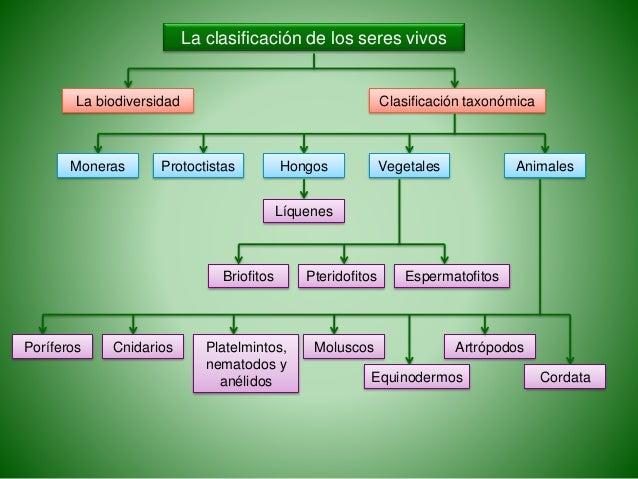 La clasificación de los seres vivos La biodiversidad Clasificación taxonómica Moneras Protoctistas Hongos Líquenes Vegetal...