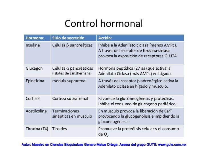 definicion metabolismo basal son un problema serius?