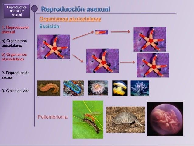 Sexual y asexual biologia