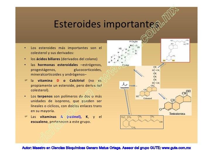 Metabolismo del acido folico