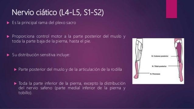 Bloqueo n ciatico Slide 2
