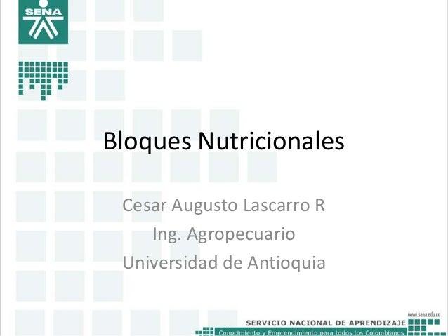 Bloques Nutricionales Cesar Augusto Lascarro R Ing. Agropecuario Universidad de Antioquia