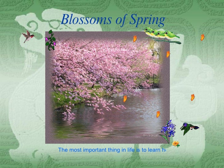 Blossoms of Spring The most important thing in life is to learn how to give out love, and to let it come in.