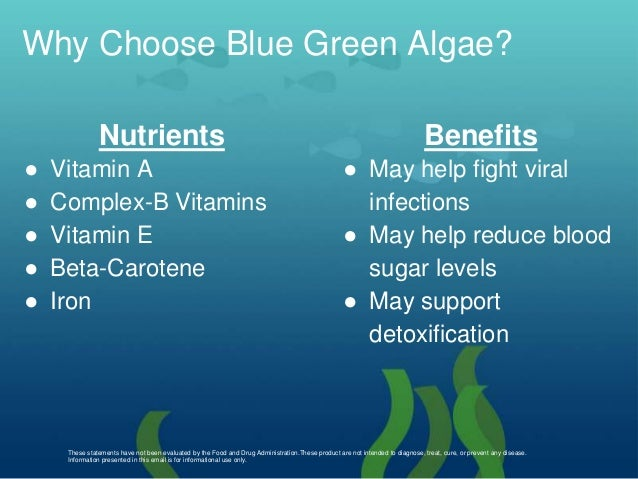 Blue-Green Algae - dnr.wi.gov