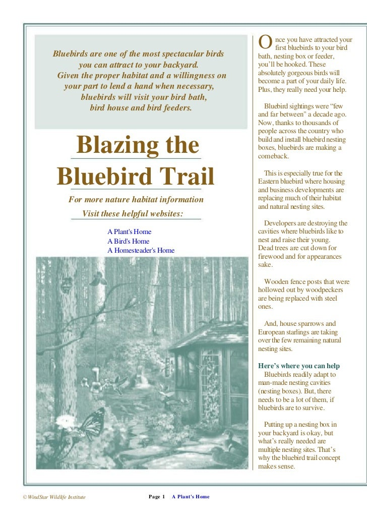 Bluebirds are one of the most spectacular birds                                                                        O  ...