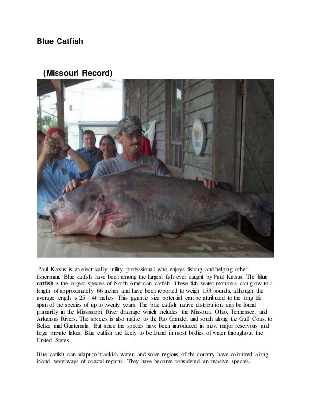 Blue Catfish (Missouri Record) Paul Katsus is an electrically utility professional who enjoys fishing and helping other fi...