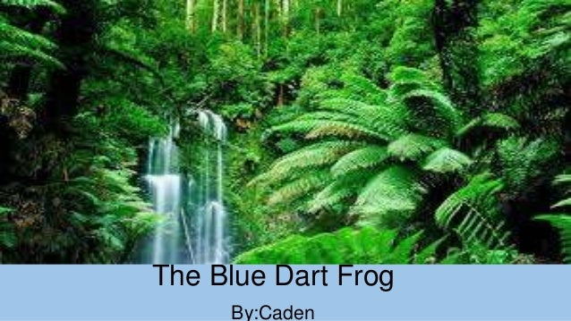 The Blue Dart Frog By:Caden
