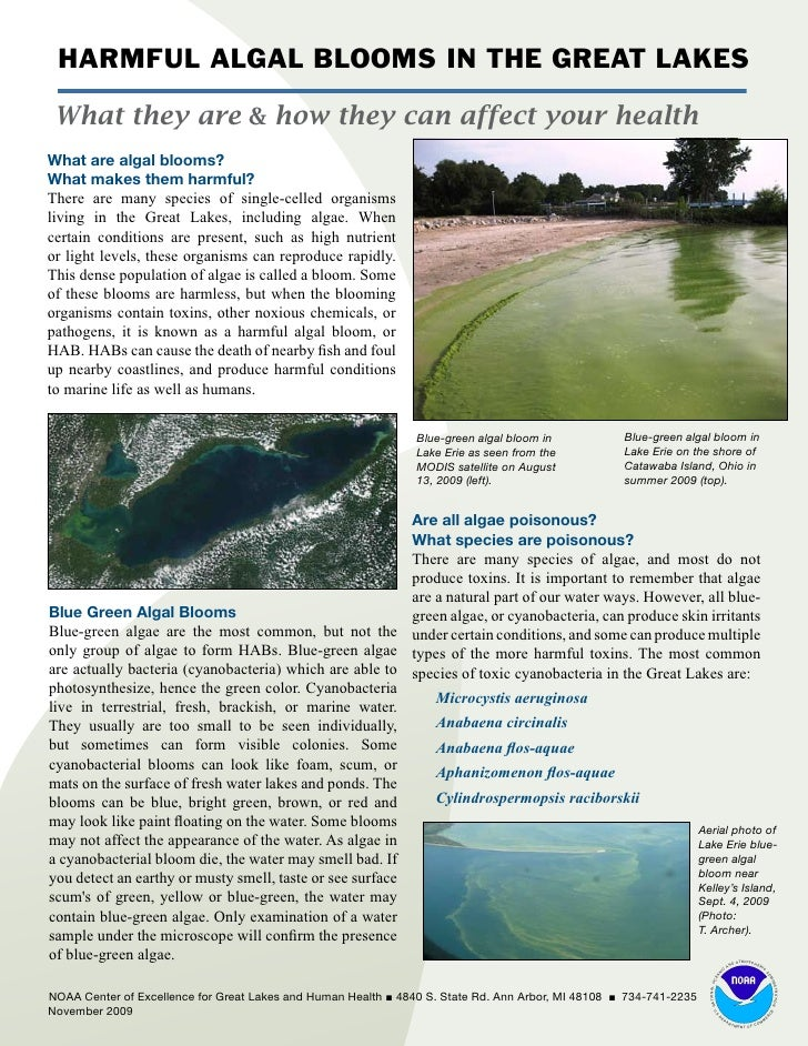 harmful algal blooms and aquaculture A cheap, safe and effective method of dealing with harmful algal blooms is on the verge of being introduced following successful field and lab tests.