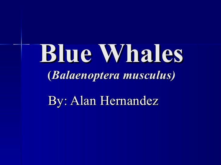 Blue Whales ( Balaenoptera musculus) By: Alan Hernandez