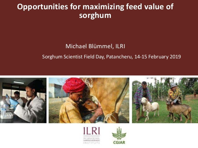 Opportunities for maximizing feed value of sorghum Michael Blümmel, ILRI Sorghum Scientist Field Day, Patancheru, 14-15 Fe...