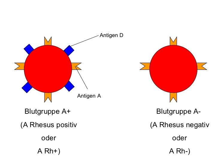 Blutgruppe A Rh Negativ