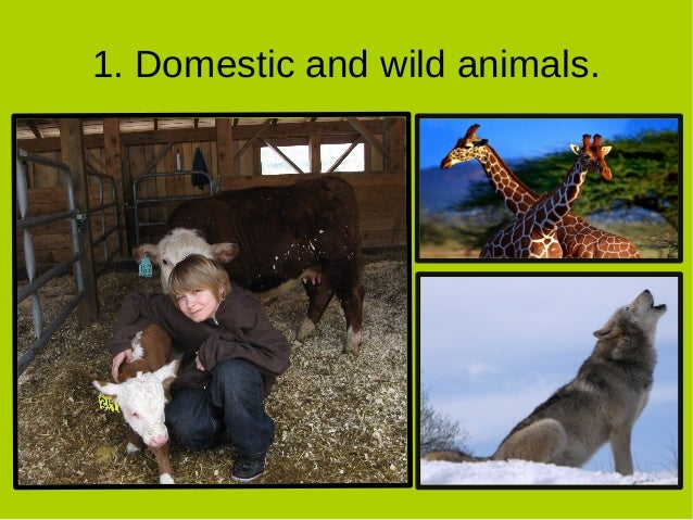 Essay on wild and domestic animals