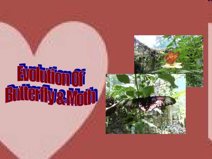 Evolution Of  Butterfly & Moth