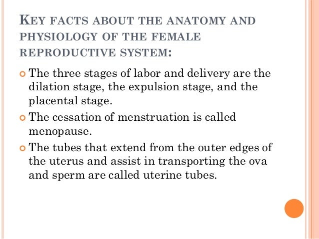 the reproductive system, Muscles