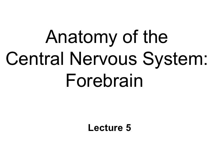 Anatomy of the Central Nervous System: Forebrain  Lecture 5