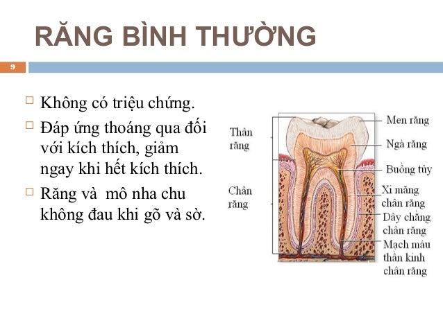 RĂNG BÌNH THƯỜNG  Không có triệu chứng.  Đáp ứng thoáng qua đối với kích thích, giảm ngay khi hết kích thích.  Răng và ...