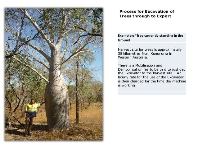 Process for Excavation of Trees through to Export Example of Tree currently standing in the Ground Harvest site for trees ...