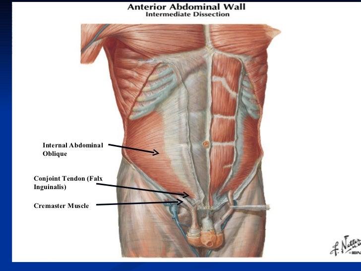 peritoneum kidney