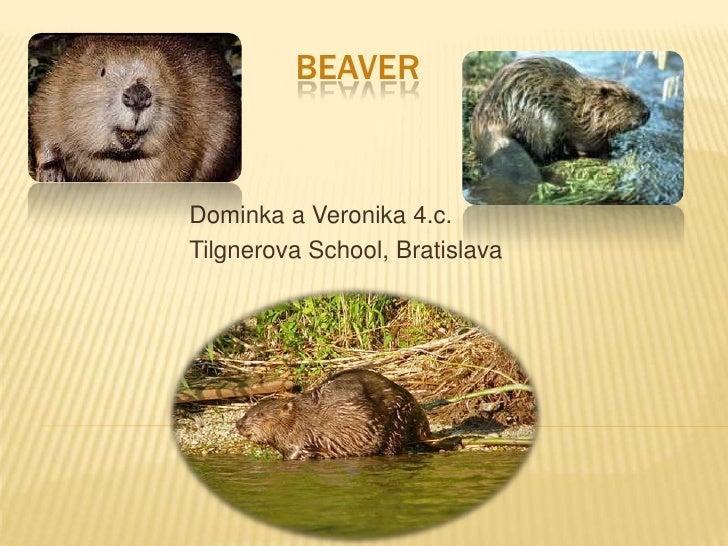 bEAVER<br />Dominka a Veronika 4.c.<br />TilgnerovaSchool, Bratislava<br />