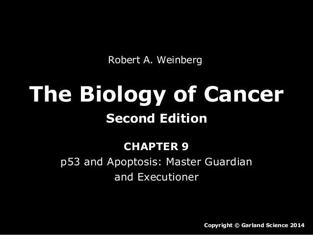 Robert A. Weinberg  The Biology of Cancer Second Edition CHAPTER 9 p53 and Apoptosis: Master Guardian and Executioner  Cop...