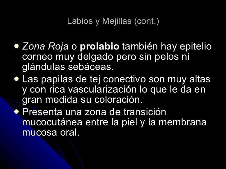 Labios y Mejillas (cont.) <ul><li>Zona Roja  o  prolabio  también hay epitelio corneo muy delgado pero sin pelos ni glándu...