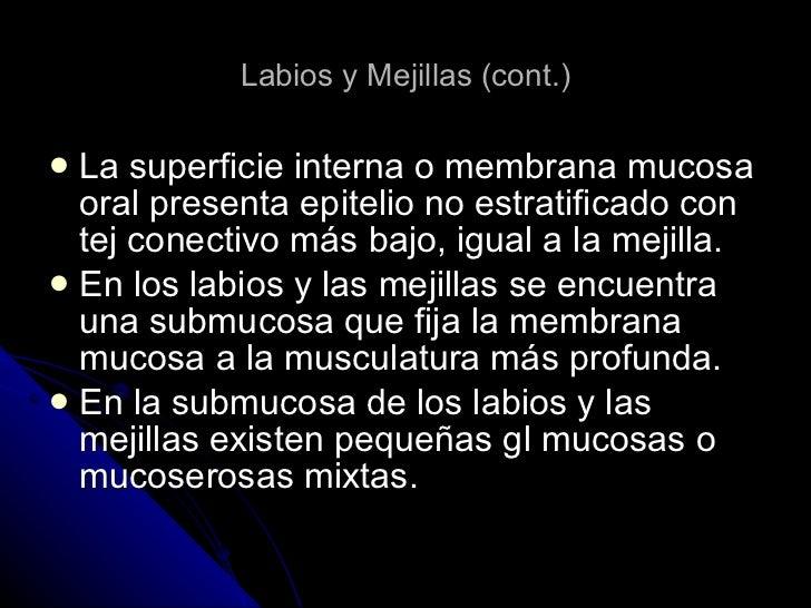 Labios y Mejillas (cont.) <ul><li>La superficie interna o membrana mucosa oral presenta epitelio no estratificado con tej ...