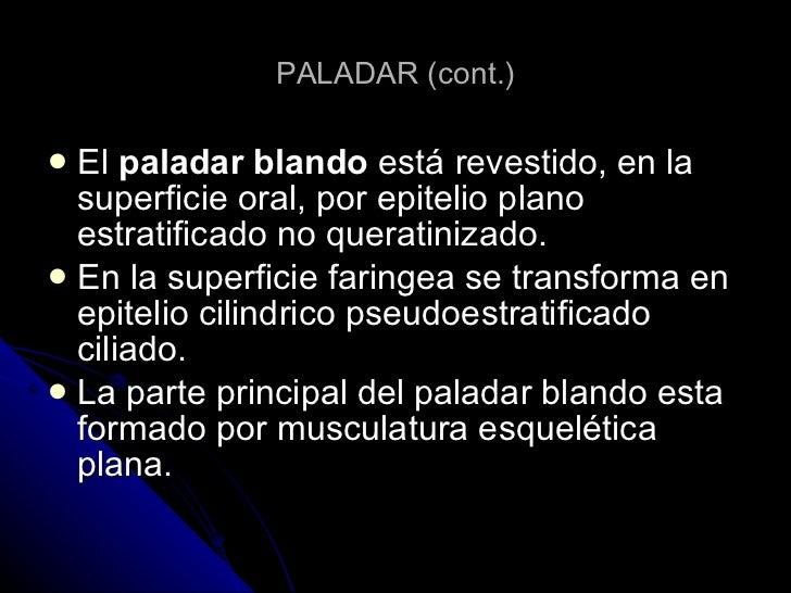 PALADAR (cont.) <ul><li>El  paladar blando  está revestido, en la superficie oral, por epitelio plano estratificado no que...