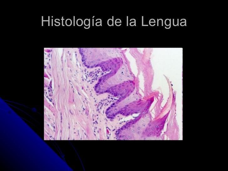 Histología de la Lengua
