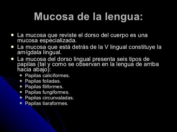 Mucosa de la lengua: <ul><li>La mucosa que reviste el dorso del cuerpo es una mucosa especializada. </li></ul><ul><li>La m...