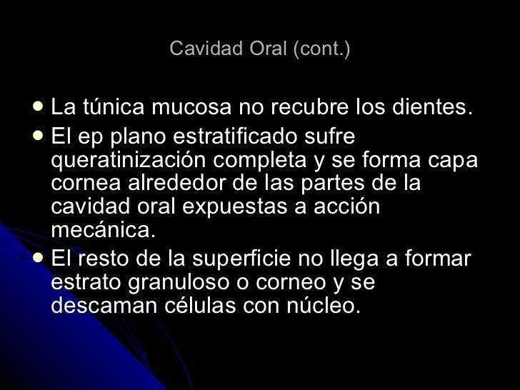 Cavidad Oral (cont.) <ul><li>La túnica mucosa no recubre los dientes. </li></ul><ul><li>El ep plano estratificado sufre qu...