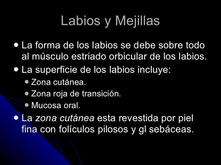 Labios y Mejillas <ul><li>La forma de los labios se debe sobre todo al músculo estriado orbicular de los labios. </li></ul...