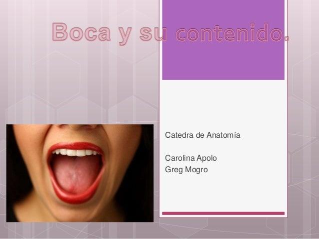 Anatomia Boca faringe esofago estomago duodeno