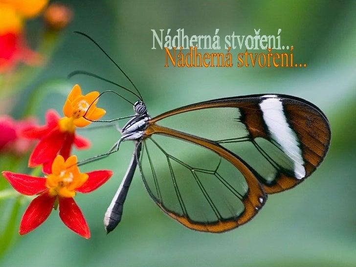 Nádherná stvoření...