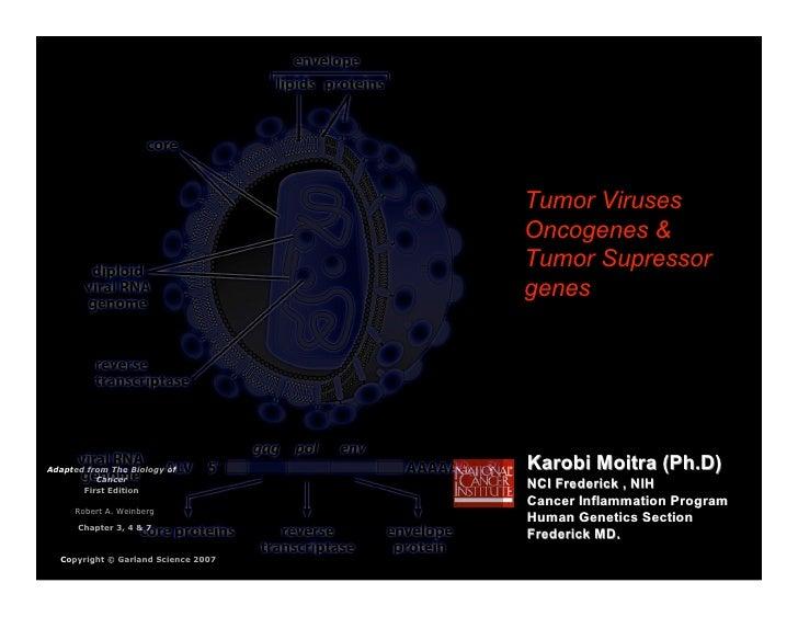 Tumor Viruses                                      Oncogenes &                                      Tumor Supressor       ...