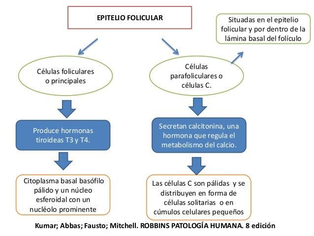 LA FUNCIÓN DE LA GLÁNDULA TIROIDES ES INDISPENSABLE PARA EL CRECIMIENTO Y DESARROLLO NORMALES Calcitonina (tirocalcitonina...