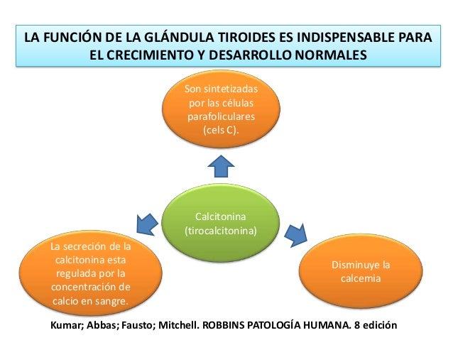 Trastornos de la síntesis de hormona tiroidea incremento compensador de la TSH sérica Hipertrofia e hiperplasia de las cél...