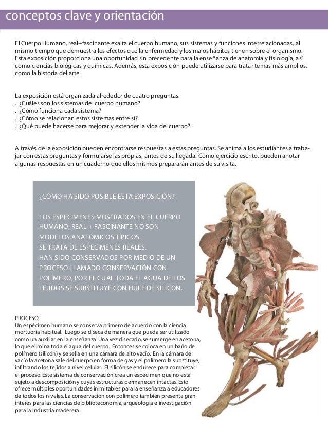 Perfecto Cómo Se Relacionan La Anatomía Y Fisiología Galería ...